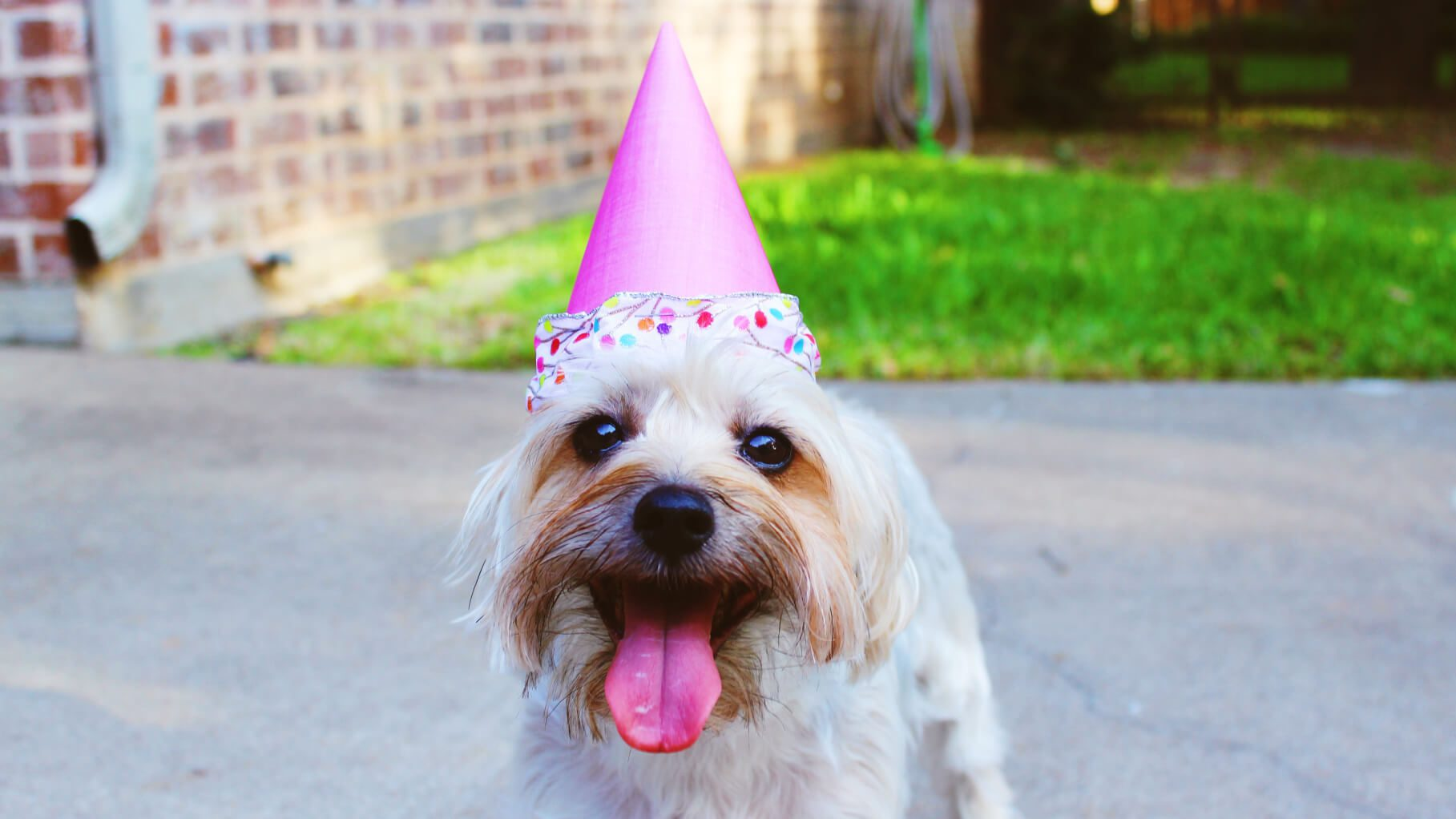 a small dog in a party hat