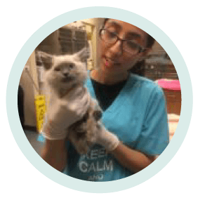 hamancia aviles a veterinary technician holding a cat at village west veterinary in chicago