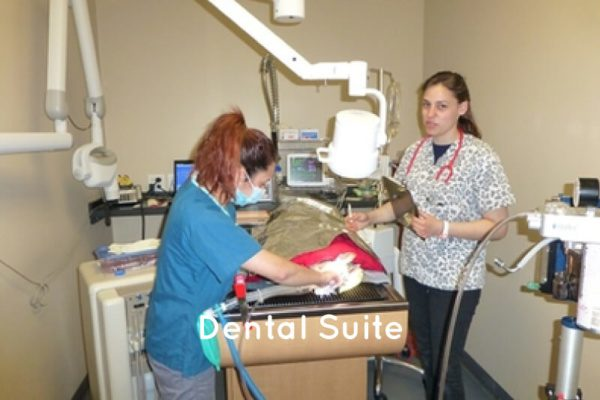 village west vet dental suite