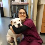 village west veterinary chicago vet pet gallery