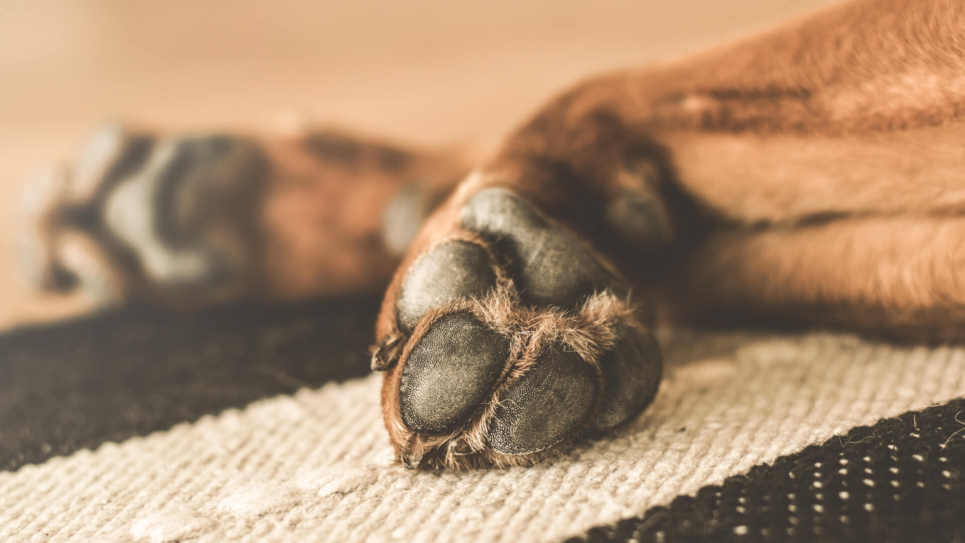 brown dog laying on the floor with paws showing
